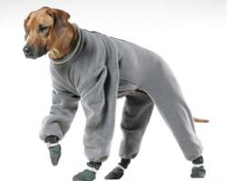 Hund i fleece-kläder